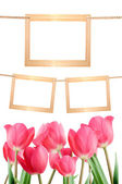 Blank frames on a background of red tulips isolated in white. Fr — Stock Photo