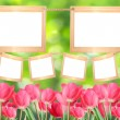 Stock Photo: Spring tulips.