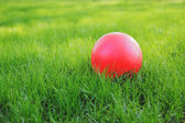 Red ball on green grass. — Stock Photo