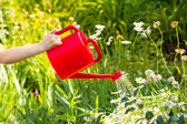 Little girl  watering a plant with watering can. Instagram filte — Stock Photo