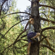 A child climbed on a pine-tree in-field. - Stock Photo