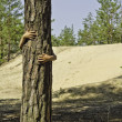 Постер, плакат: A child peeks out from a pine tree
