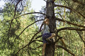 A child climbed on a pine-tree in-field. — Stock Photo