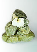 White tender orchid on a construction from a wild natural stone — Stock Photo