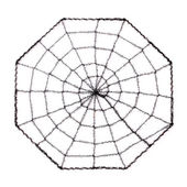 Spider Web isolated on white — Stock Photo