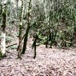 Vídeo de stock: Twins running fast through eerie forest appear side by side breathing heavily, then run off.