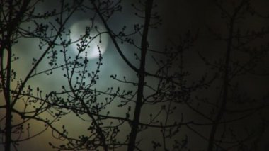 High Definition full moon time lapse with clouds passing and winter trees in foreground. — Stock Video