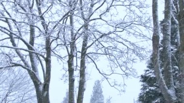 Fresh snow falling with trees in background in winter. — Stock Video