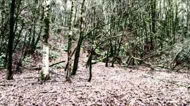 Twins loopt snel door griezelig bos verschijnen naast elkaar ademhaling zwaar, dan lopen weg. — Stockvideo