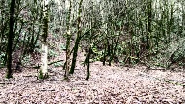 Twins running fast through eerie forest appear side by side breathing heavily, then run off. — Stockvideo