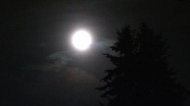 Volle maan en boom tl — Stockvideo