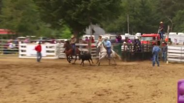 Steer Wrestling Cowboy — Stockvideo