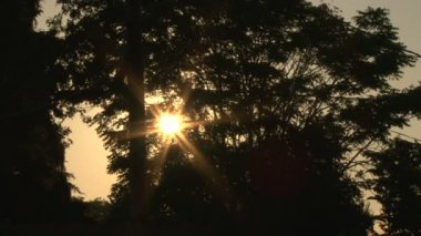 Sunshine star flare flickering through windy tree leaves at sunset. — Stock Video