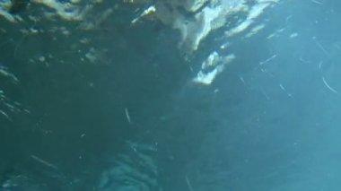 Penguins swim in an aquarium — Stock Video