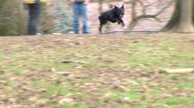 Super Dog — Stock Video