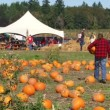 Family in pumpkin patch on sunny day in Portland, Oregon during harvest. — Stock Video
