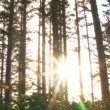 Sun shines through trees in forest — Stock Video #19309529