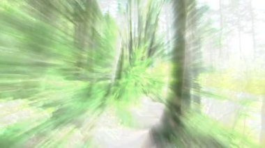 Abstract background imagery in forest. — Stock Video