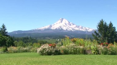 Mt Hood Oregon scenic with many colorful flowers in full bloom. — Stock Video