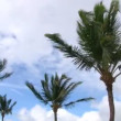 Palm trees against the sky — Stock Video