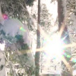 Sun shines through trees in winter — Stock Video #21193913