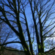 Bare tree branches against the blue sky — Stock Video #21194681