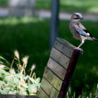 Stock Photo: Bird resting at bench