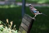Bird resting at a bench — Stock Photo