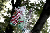 Glass bottle hanging from tree — Stock Photo