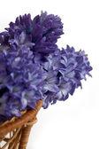 Blue hyacinths — Stock Photo
