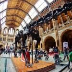 LONDON, UNITED KINGDOM - MAY 31: Interior view of Natural Histor — Stock Photo #14634153
