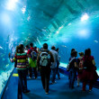 VALENCIA, SPAIN - MARCH 30: in the underwater tunnel of the Oceanographic Science Center with more than 45,000 examples of 500 different marine species. March 30, 2012 in Valencia, Spain — Stockfoto