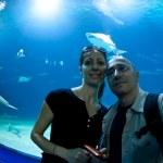 Italian couple making pictures in front of aquarium — Stock Photo