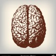 Engraving vintage brain illustration — Imagen vectorial