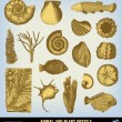 Engraving vintage Fossils set illustrations. — Stock Vector