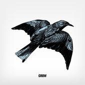 Engraving vintage crow. — Stock Vector
