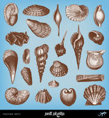 Engraving vintage shell set. — Stock Vector