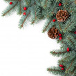 Christmas Spruce — Stock Photo