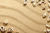 Shells On Sand — Stock Photo