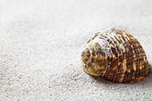 Sand And Shell — Foto Stock