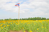 Thai flag in the sunflower field — Stock Photo