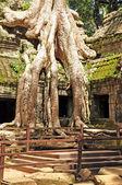 Ta Prohm temple — Stock Photo