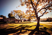 Colorful trees of Long Beach in the autumn — Stock Photo