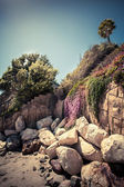 Lonely Palm tree on a rocky  coast — Stock Photo