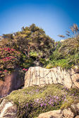 Rocky cliffs coast with green trees and  ivy flowers — Stock Photo