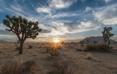 Joshua Tree National Park Sunrise — Stock Photo