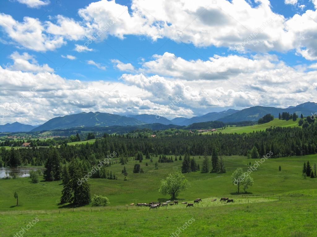 Beautiful lanscape of Bavaria. Germany. With cows and goats  Stock Photo #14626205
