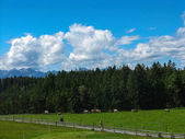 Landscape of Bavaria — Stock Photo