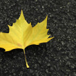 Yellow leaf — Stock Photo #13918921