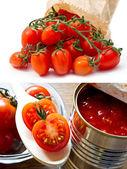 Tomatenkonserven und frischen cherry-tomaten — Stockfoto